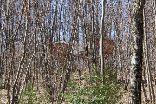 Cabane Amande au printemps